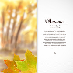 Vector card. Autumn composition with maple leaf and drops of dew or rain. Blurred misty background. Place for your text.