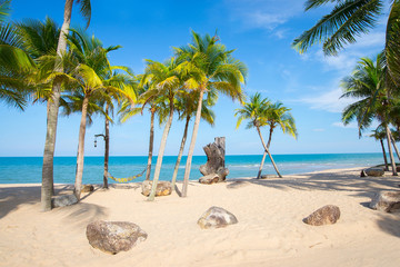 Coconut trees lined beach by the sea with beautiful scenery.