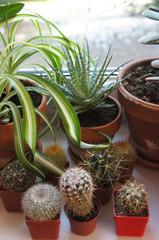 Mix of houseplants on the window