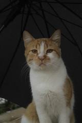 gato_en_boulevard_del_rio_cali