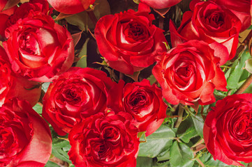 Flower bouquet from red roses