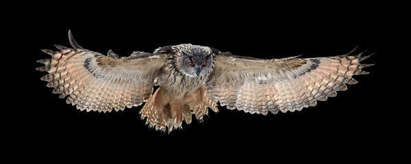 Fotobehang Uil Isolated on black background, Eagle owl, Bubo bubo, giant owl flying directly at camera with fully outstretched wings. Owl with bright orange eyes. Nocturnal bird of prey in back light.