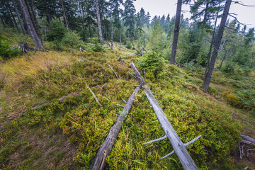 Forest on Polish-Czech border near tourist attraction of Table Mountains called Errant Rocks in Sudetes, Poland