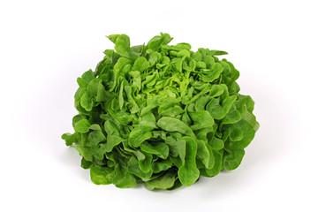 Grüner Eichblattsalat
