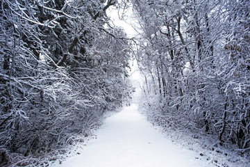 A hiking trail through a forest of frost covered trees under a new snowfall in a white rural landscape
