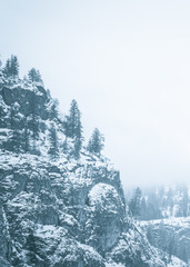 Cliffside and evergreen trees covered in snow and surrounded by thick fog in monochrome