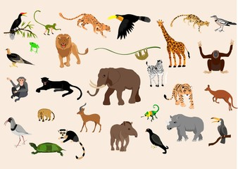 Big set of exotic animals and birds living in savannah, tropical forest,  jungle isolated on white  background. Collection of cute cartoon characters.  vector illustration.