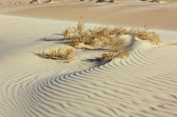 Texture of sand in the desert with plants