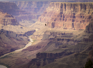 A bird of prey is climbing up into the sky above the Grand Canyon National Park's South Rim.
