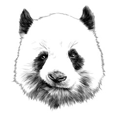 head Panda grins sketch vector graphics monochrome drawing