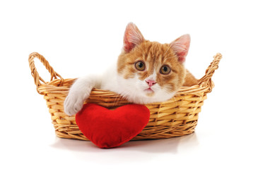 Kitten in a basket with the heart.