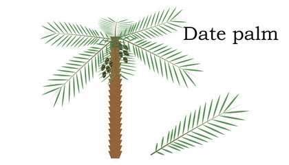 Date palm  Trees vector element. vector green