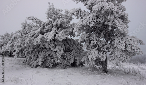 dark winter forest in a mystical fog stock photo and royalty free