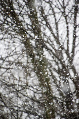 Artistic close up of the snow falling over the branches of a tree