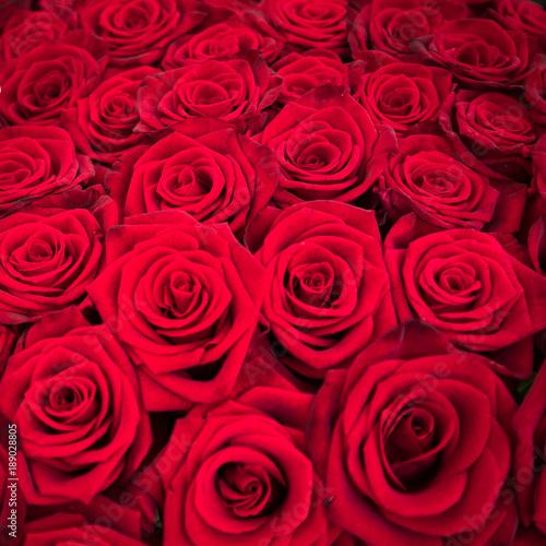 rote rosen zum valentinstag stockfotos und lizenzfreie bilder auf bild 189028805. Black Bedroom Furniture Sets. Home Design Ideas