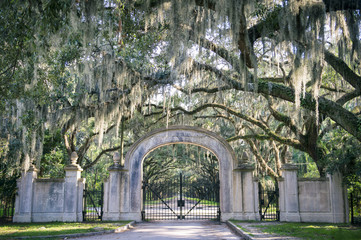 Fond de hotte en verre imprimé Amérique du Sud Arched gateway leading to quiet southern country road lined with oak trees with overhanging branches dripping with Spanish moss