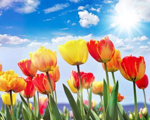 Glück, Lebensfreude, Frühlingserwachen, Auszeit, Leben: Buntes, duftendes Blumenfeld mit Tulpen m Frühling :)
