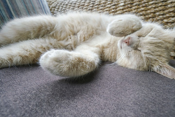 cute yellow cat sleeping on sofa