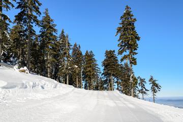 zimowy krajobraz ze śniegiem na drzewach