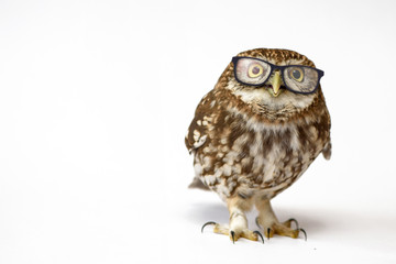 Little Owl wearing glasses, (Athene noctua) standing on a white background Wall mural
