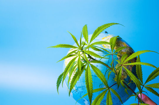 Marijuana leaf in front of a globe
