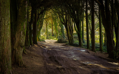 Path in a beautiful forest
