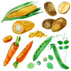 Watercolor illustration, set, images of vegetables, corn and corn kernels, carrots, potatoes and peas.