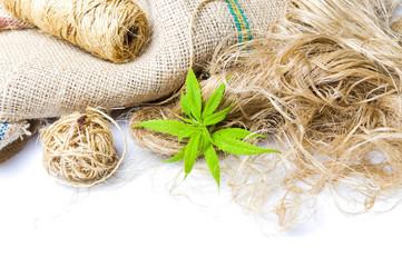 Marijuana leafs and cannabis hemp isolated