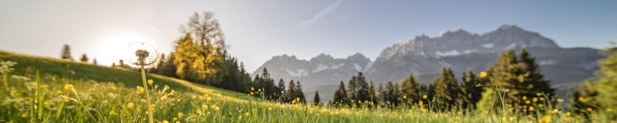 eine Pusteblume im Panorama mit den Bergen im Hintergrund