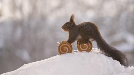Red squirrel on a vehicle with wheels