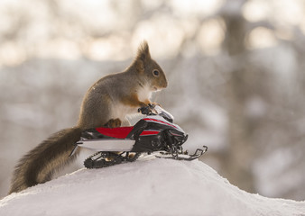 Red squirrel sitting on snowmobile
