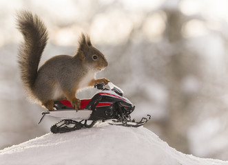 Red squirrel on snowmobile