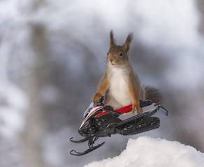 Red squirrel jumps with  a snowmobile