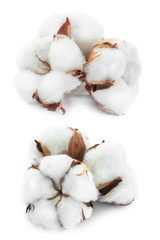Cotton white delicate dry flower bud set collection isolated on white background