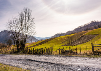 grassy rural fields on hillside. beautiful springtime scenery with snowy mountain ridge in the distance