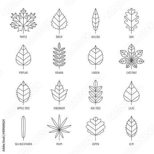 """""""Leaves types with names outline vector icon set."""" Stock ..."""