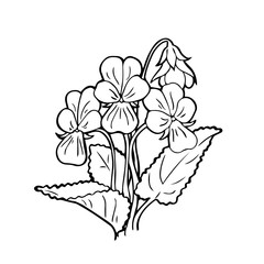 Vector bouquet of forest violets on a white background. Hand-drawn botanical illustration in the style of doodle, an isolate of a forest or garden flower.