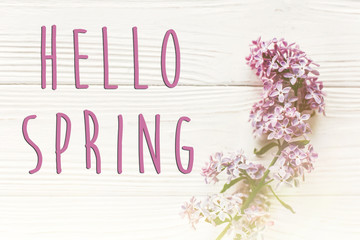 hello spring text sign on spring flat lay image. beautiful lilac flowers on rustic white wooden background top view. simple greeting card. earth day. happy mothers woman day. eco