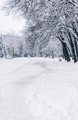 Snowy pathway in the park