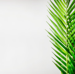 Wall Mural - Tropical palm leaves on white desk background, top view, border
