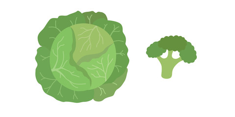 Vector green cabbage and broccoli