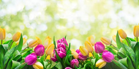 Frühling Karte Banner frisch Tulpen