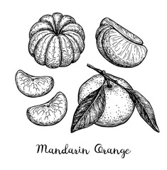 Ink sketch of tangerines.