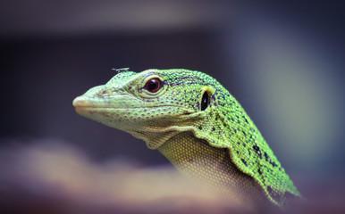 green lizard 3