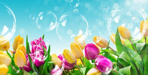 Feld Tulpen mit Seifenblasen und Himmel