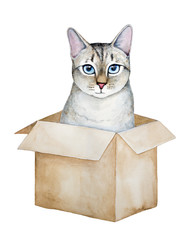 Cute tabby kitten sitting in carton box. Lynx point siamese domestic pet breed, beautiful blue eyes, fluffy fur. Brown paper container. Hand drawn water color drawing on white background, cut out.