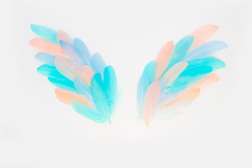 Wings of real colored feathers. White background. Pink, mint, turquoise and blue.