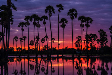 landscape of sugar palm tree in Twilight time ,Thailand