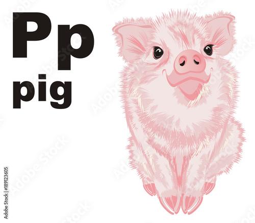 Pig Piggy Pork Porky Animal Farm Pink Illustration Cute