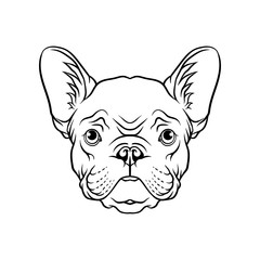 Black and white sketch of pug dogs head, face of pet animal hand drawn vector Illustration